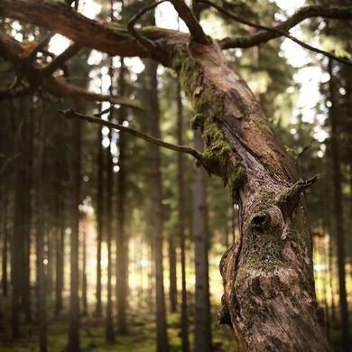Prajeme Vám krásny a ničím nerušený víkend,priatelia 🌲  #deerland #weekendvibes #nature #mood #forest #hunting #huntingtime